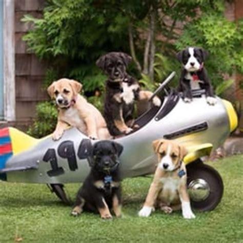 puppy rescue oregon oregon rescue 10 billeder 24 anmeldelser dyreinternater 6700 sw nyberg st