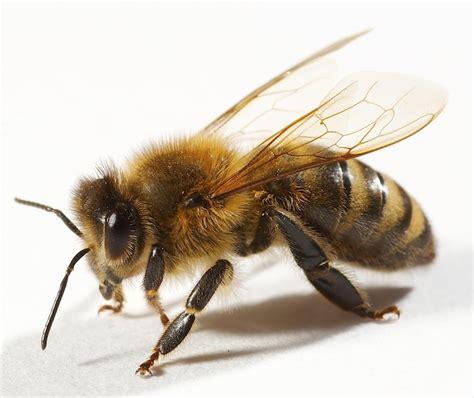 imagenes en movimiento joomla picadura de abeja emergencias