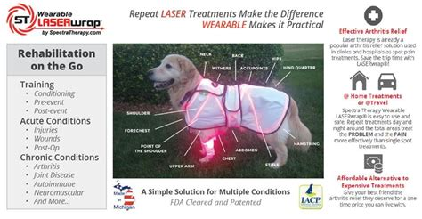 canine laser therapy for arthritis canine arthritis spectra therapy