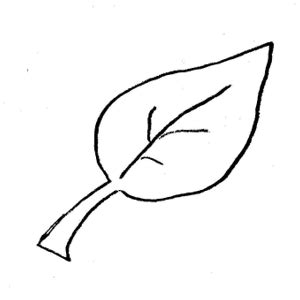 Outline Of A Leaflet by Simple Leaf Outline Clipart Gclipart
