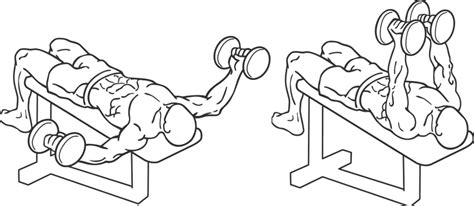flat bench dumbell flye chest dumbbell flyes monthlymale