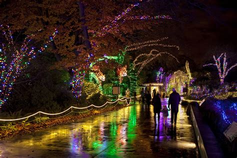 zoo light seattle the best 28 images of zoo lights seattle wildlights