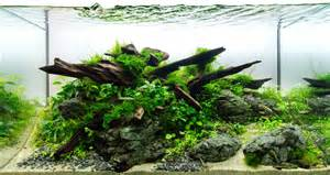 aquascape wood guide to aquascaping aquariums romsey world of water