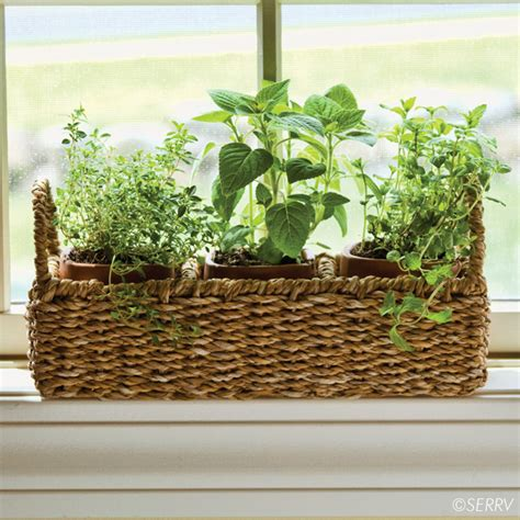 Window Herb Garden Pots Wedding Windowsill Herb Planter