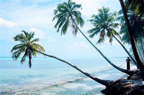 palm trees blue sky  photo  pixabay
