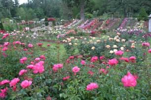 file rosetestgardenportland jpg
