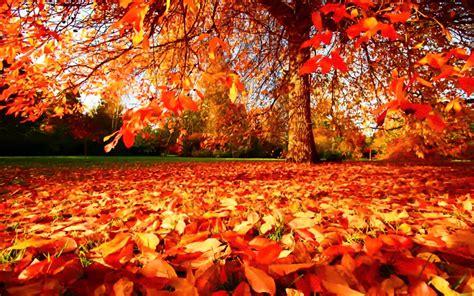 imagenes del otoño oto 241 o una estaci 243 n muy trucos trucos para decorar