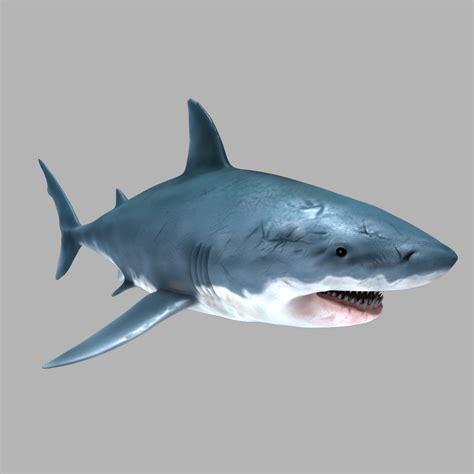 Changing Table White Great White Shark 3d Model Max Obj Fbx Cgtrader Com