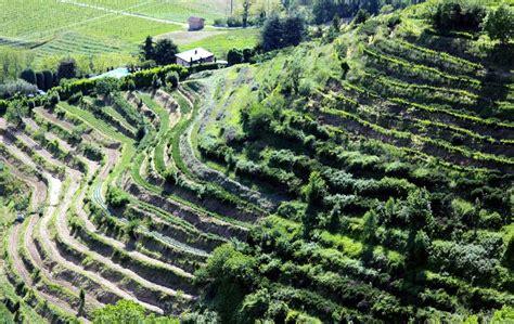 terrazzamenti liguri montevecchia terrazzamenti vigneto