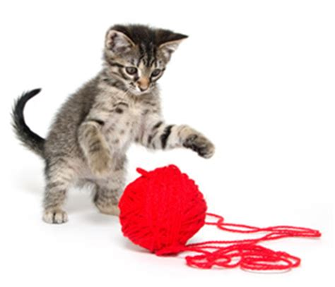 Cat String - ask a vet what should i do if my cat eats string catster