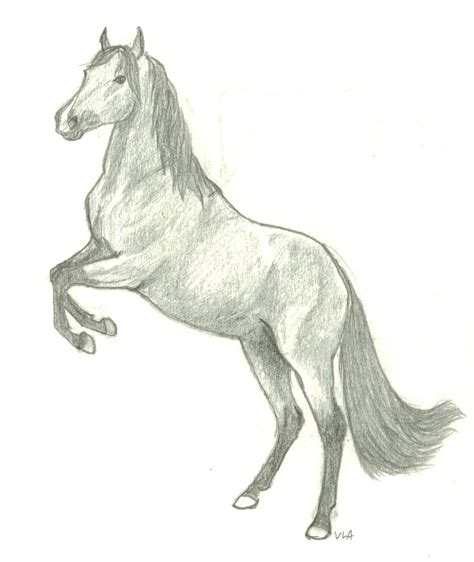 Sketches Horses by How To Draw Rearing