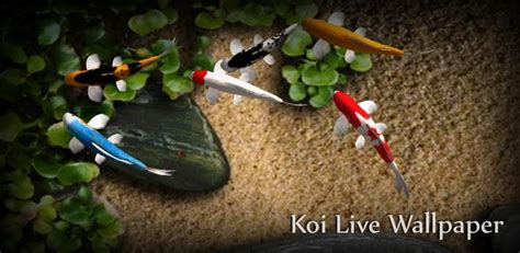 koi live wallpaper for windows 7 top10 free live wallpaper for android