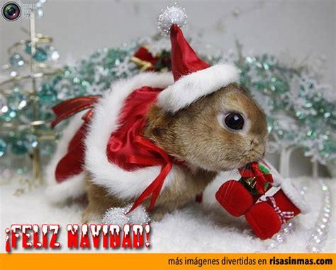 imagenes navideñas grasiosas postales navide 241 as animadas graciosas imagui