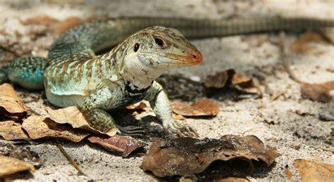imagenes de animales no conocidos los 5 reptiles m 225 s populares mascotas