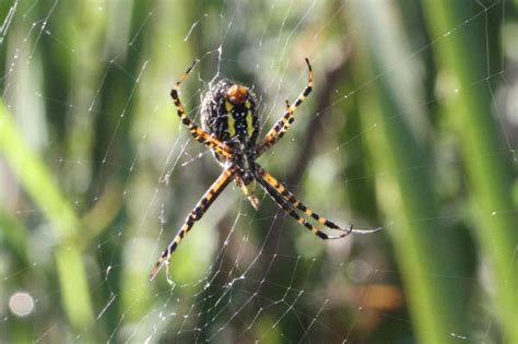 Banded Garden Spider Cycle County Bird Sightings