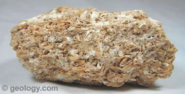 coquina rock limestone rock uses formation composition pictures