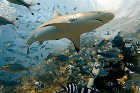 gopro shark how to take kick travel photos with your gopro