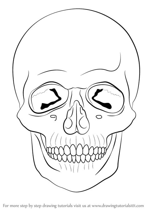 easy step by step how to draw skull and snake pics learn how to draw a skull skulls step by step drawing