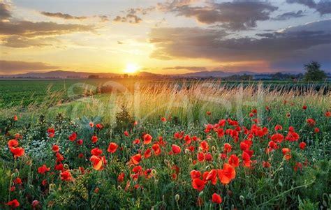 cuadros de paisaje cuadros de paisajes cuadro de paisaje con flores tiendas