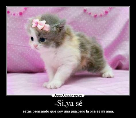 imagenes de te extraño gatitos tiernas de gatitos para facebook imagui