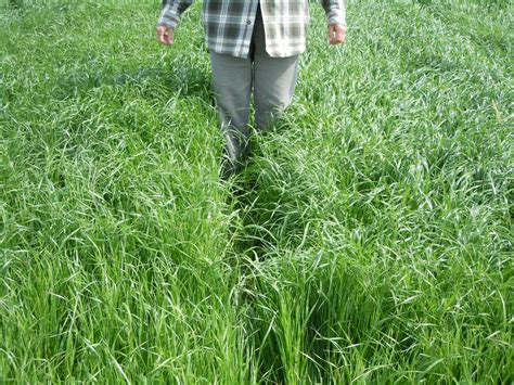 how to plant winter grass cover crop and forage meeting aug 14 2013 plant cover crops