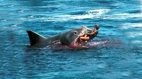 best shark attack top 3 shark attacks in hawaii top 3 horrific shark