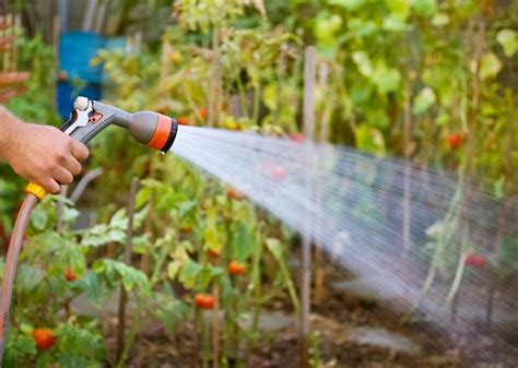 Tips For Reducing Water Usage In The Garden Best Way To Water A Vegetable Garden