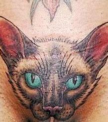 foto katzen tattoo im intimbereich einer frau