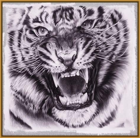imagenes de tigres para dibujar a lapiz faciles imagenes para dibujar de tigres archivos imagenes de tigres