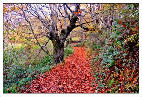 imagenes otoño galicia fotos quindous lugo