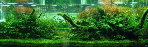 Ada Aquascaping by Ideas For 180 Gallon Aquascape The Planted Tank Forum