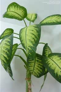 house plant identification identify houseplants www imgkid com the image kid has it