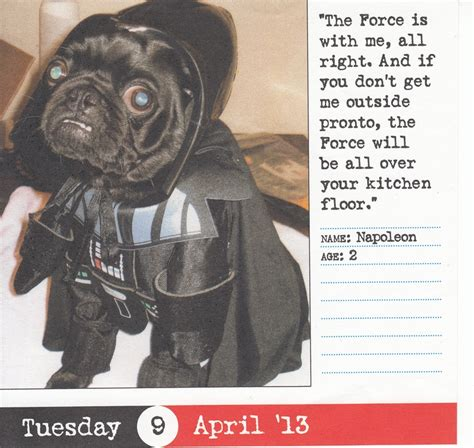 darth vader pug darth pug a black pug dressed up like darth vader from wars animal pins