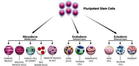 Laminine Stem Cell laminine stem cell therapy alternative