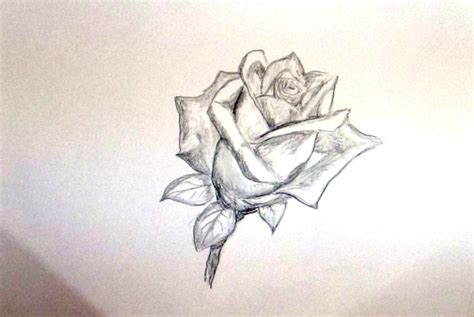 Sketches Flowers by Flower Sketch Drawing Beautiful Flower Sketch Drawings