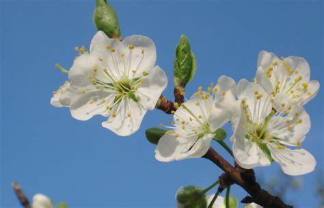 fiori piante l app per riconoscere piante e fiori si chiama plantnet