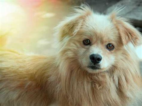 bacterial infection in dogs what are anaerobic bacterial infections in dogs pets4homes