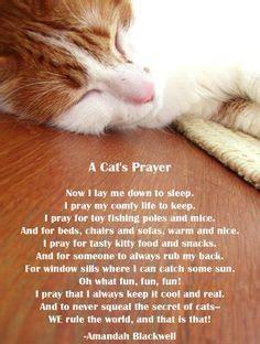 cat prayer quotes quotesgram