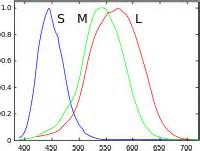 trichromatic theory of color vision trichromacy