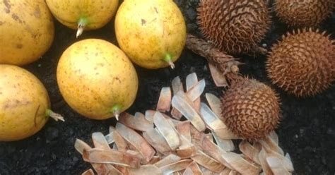 Daleys Fruit Tree Blog Seeds