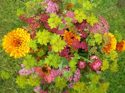 flowers in garden flowers flower birthday flowers picture s world