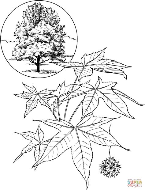 elm leaf coloring page elm tree coloring coloring pages