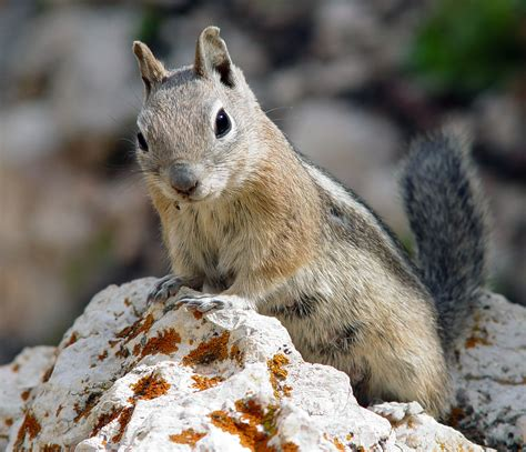 squirrel loses nut goes totally nuts rocketnews24