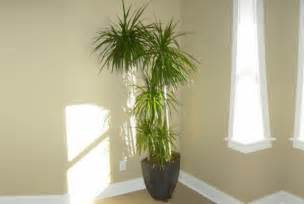 Houseplants That Don T Need Sunlight 7 Beautiful Indoor Plants That Don T Need Sunlight To