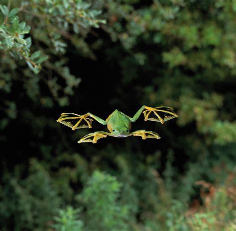 animali volanti tecniche di atterraggio la fotografia degli animali volanti