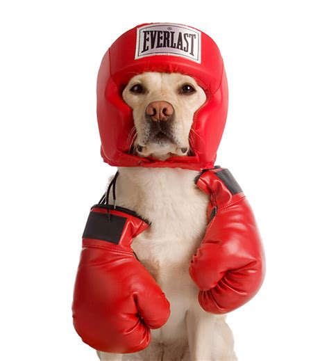 what dog you got boxing forum official shinee world thread page 2358 allkpop forums