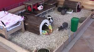 Guinea Pig Hutch Pets At Home Guinea Pig Cage Layout Episode Two 18th November 2012