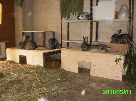 stall deutsche riesen verliebt in deutsche riesen seite 18 kaninchen