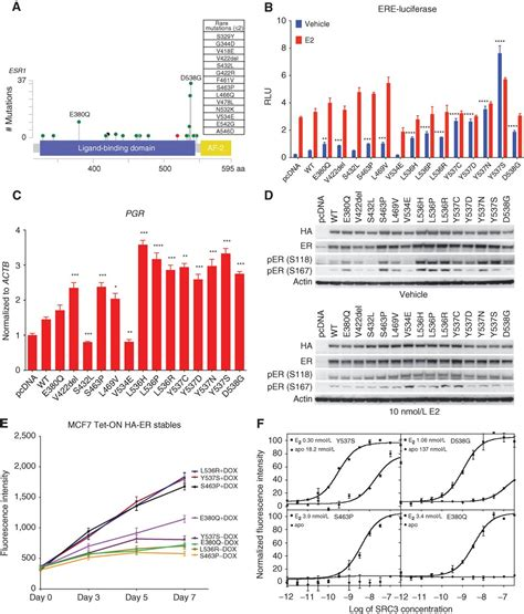 activating esr mutations differentially affect