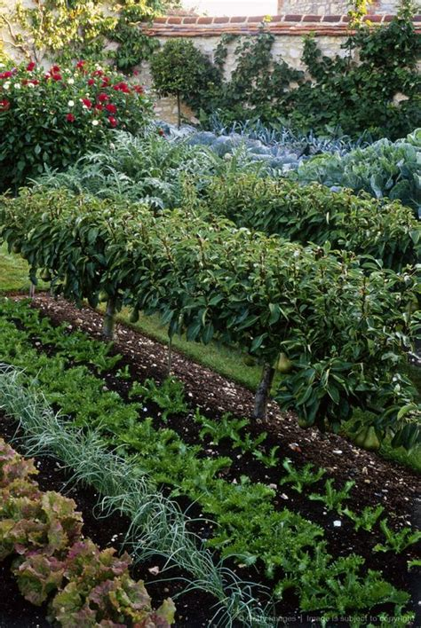 formal vegetable garden formal walled vegetable garden with cabbage cardoon and